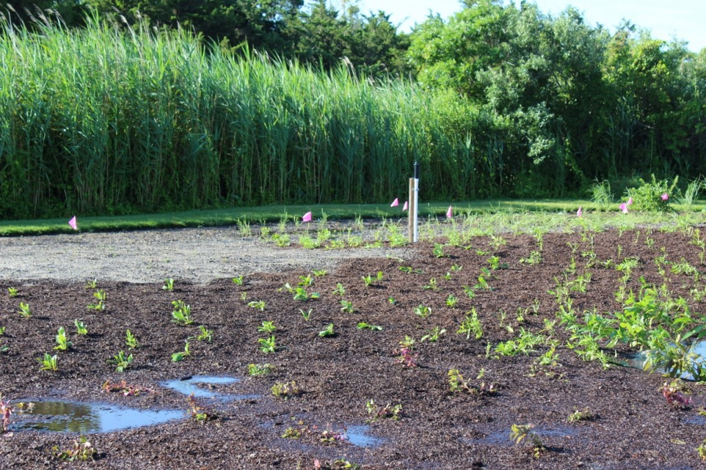 Plantings at the Pollinator Habitat